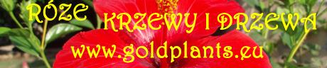 krzewy, drzewa, rośliny, róże pnące, pnącza, trawy, magnolie, azalie, nasiona